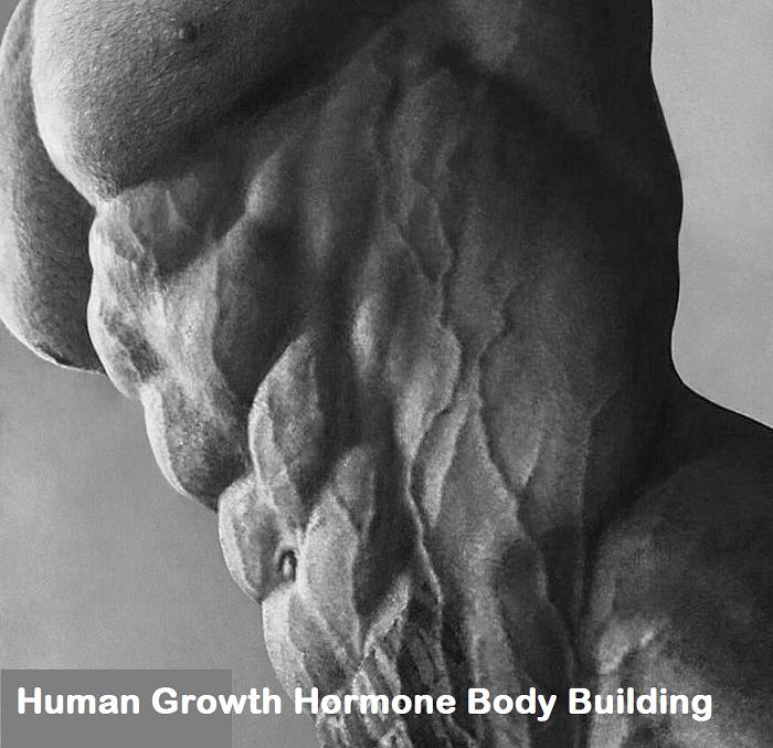 Human-Growth-Hormone-Body-Building